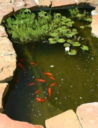 goldfish for ponds decor references