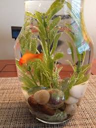 Goldfish Bowl Vase Goldfish Bowl Decorations Images Reverse Search
