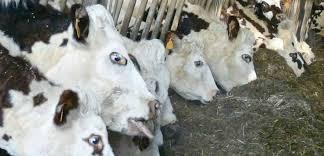 chambre agriculture caen calvados une nouvelles charte des contrôles mise en place dans l