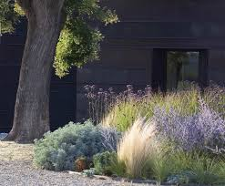 plants native to mexico gossamer gardens 11 ideas for landscaping with mexican feather