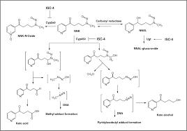 phenylbutyl isoselenocyanate modulates phase i and ii enzymes and