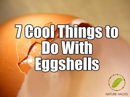 ground eggshells 7 cool things to do with eggshells