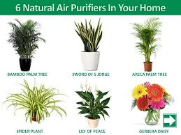 best plants for bedroom air purifying plants for bedroom bedroom interior bedroom ideas