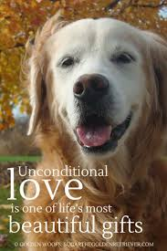 Love Is Unconditional Quote by 64 Best Animal Quotes We Love Images On Pinterest Animal Quotes