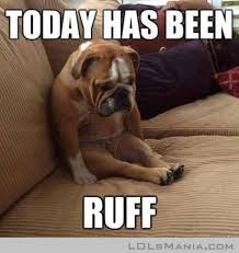 Long Day Memes - we have all felt like this after a long day funny dog memes 12