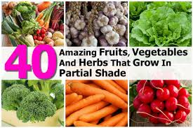 Shade Garden Vegetables by Garden Vegetables That Grow In Shade Home Decorating Interior