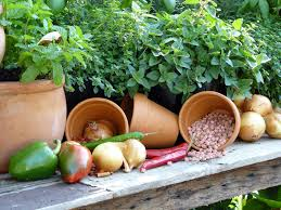 how to successfully plant and grow an organic vegetable garden