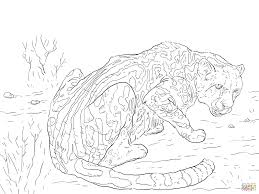 king cheetah coloring page free printable coloring pages