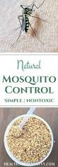 natural mosquito control an effective non toxic solution