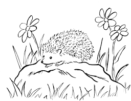 hedgehog coloring pages inside coloring page eson me