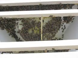 Top Bar Beehive Plans Free Top Bar Hive Construction U2013 Dennis Murrell Beesource Beekeeping