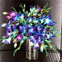 Orchid Delivery Blue Orchids Bridal Bouquet Products Local Florist In San