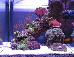 nano aquascape thinking negative an overlooked aquascaping aspect opinion reef
