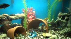 diy aquarium decor my aquarium club