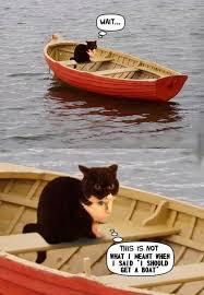 Cat Meme Boat - 30 funny animal captions part 22 30 pics amazing creatures