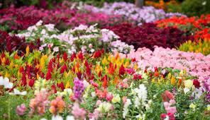 march gardening checklist roger u0027s gardens