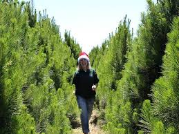 where to buy trees in melbourne decorations