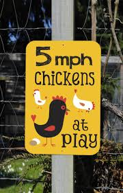 65 best chicken stuff images on pinterest chicken hens and 9