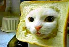 Cats Meme - 15 best cat memes ever
