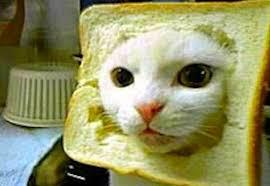 Cat Pic Meme - 15 best cat memes ever