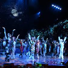 cats set for summer in blackpool