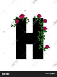alphabet rose trellis h image u0026 photo bigstock
