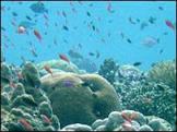 BBCBrasil.com | Reporter BBC | Estoques de peixe podem acabar ...