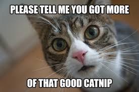Good Cat Meme - please tell me you got some more of that good catnip funny cat meme