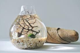 Nest Home Decor Coral Sea Nest Aqua Terrarium Marimo Ball Japanese Moss Ball