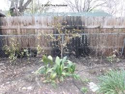 garden screening my gardener says 20130302 10 new