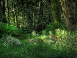 forest glade with stones wallpapers and images wallpapers