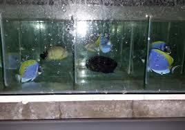 image gallery tropical fish aquatic plants exporters in sri