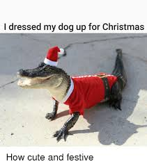 Cute Christmas Meme - i dressed my dog up for christmas how cute and festive dogs meme