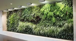 plant cheap indoor plants famous cheap large indoor plants