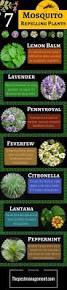 best 25 mosquito yard spray ideas on pinterest mosquito spray