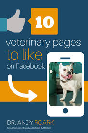 Resume Samples Veterinarian by 29 Best Job Seeking Images On Pinterest Resume Design Template