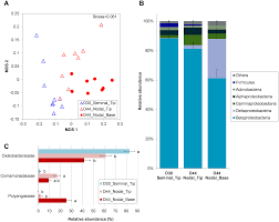 plos one microbiome and exudates of the root and rhizosphere of