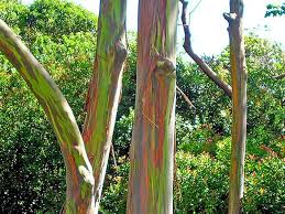 nature blows my mind rainbow colored trees grow 200