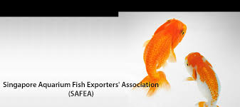 singapore aquarium fish exporters association