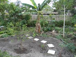 Florida Backyard Ideas The Great South Florida Food Forest Project Pt I The Survival