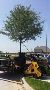 tree planting and delivery us trees of