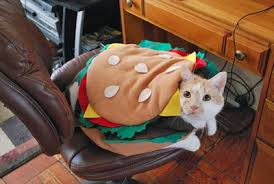Funny Halloween Costumes Cats Wears Halloween Costumes Cats Cats