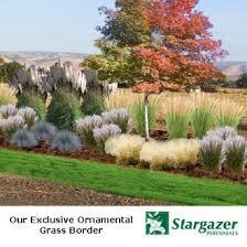 ornamental grasses landscaping garden flowers