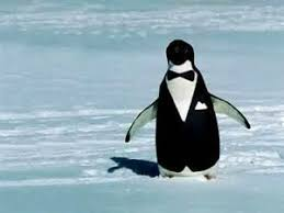 Peguin Meme - penguin in a tux penguins know your meme