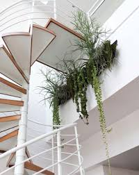 modern house plants fresh indoor plants green painted doors