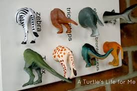 animal specimen art a turtle u0027s life for me