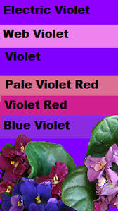 what color is violet