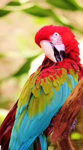 257 best parrots at home images on pinterest beautiful birds