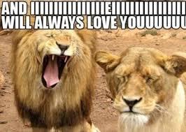 I Love U Memes - top 10 valentine s day memes