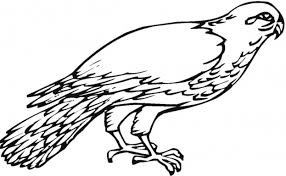 fantastic falcon bird coloring pages animal coloring pages of